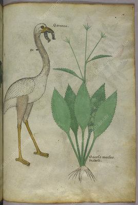 A plant with a flamingo-like bird