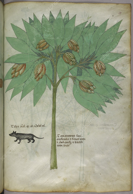 Illustration of a plant with an animal