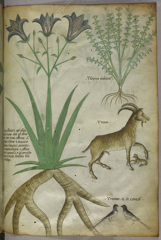 Illustration of plants, birds and goats