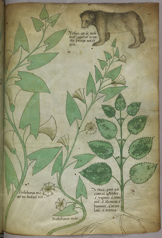 Illustration of plant with a bear