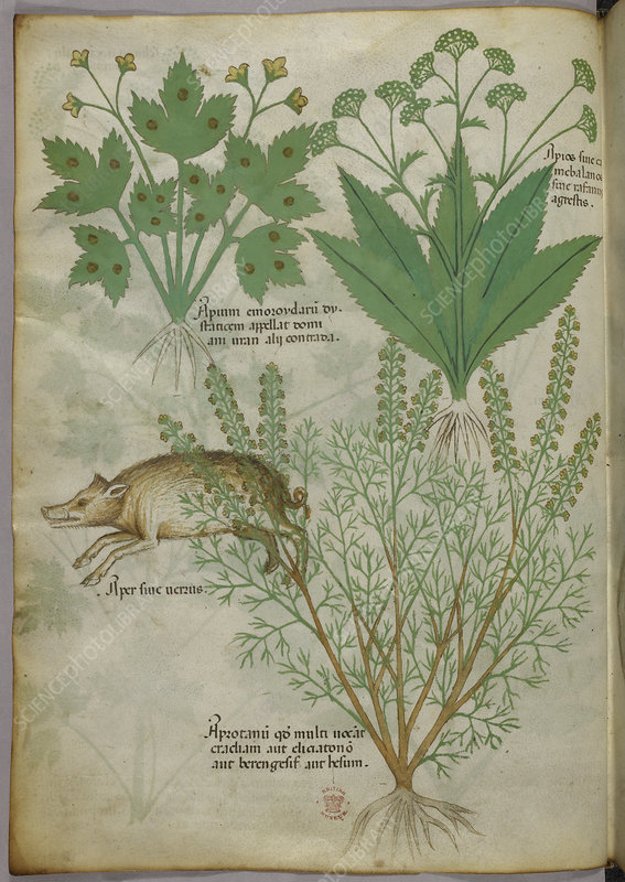 Illustration of plants and a boar