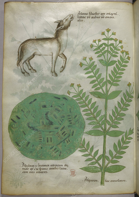 Illustration of plant with horse
