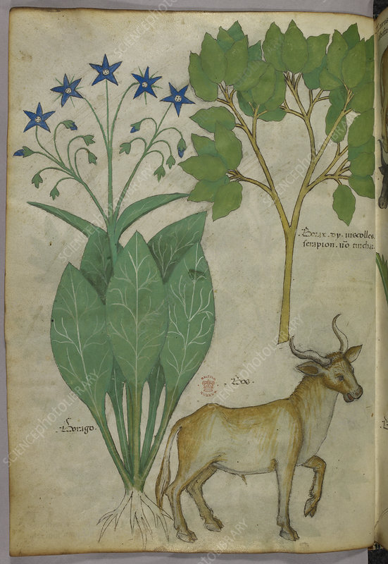 Illustration of plants and a bull