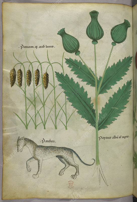 Illustration of plants and a panther