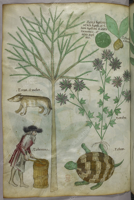 Plants, a turtle, and a man