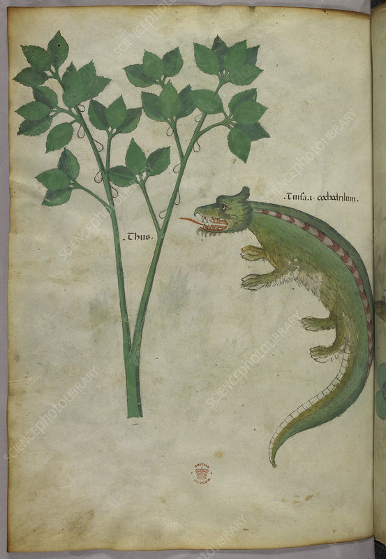 Illustration of a plant and a crocodile