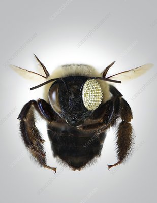 Bee with electronic compound eye, concept