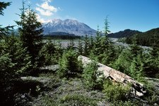 Mount St Helens lahar area regrowth, 2001