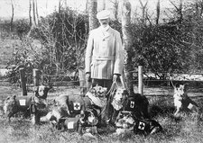 World War I British Red Cross dogs
