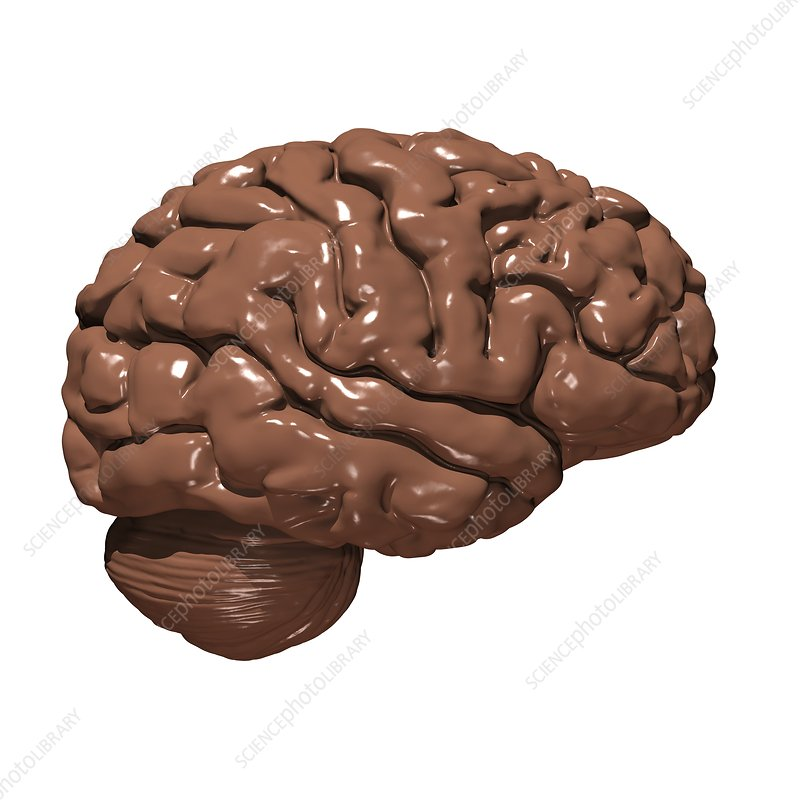 Brain made of chocolate, conceptual image