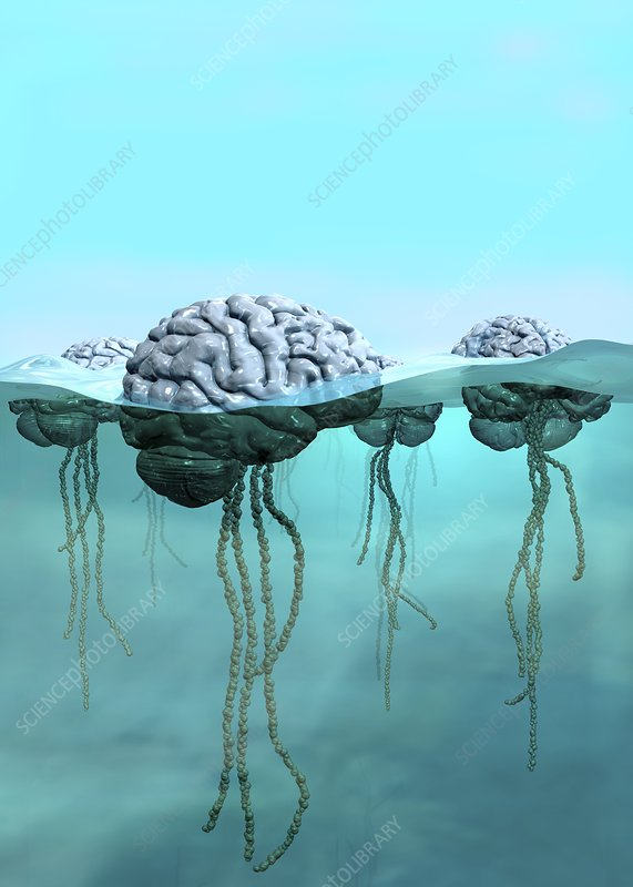 Brains as jellyfish, conceptual image