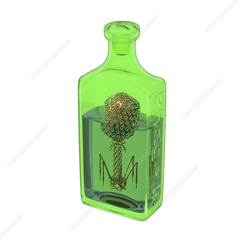 Phage therapy bottle, conceptual image