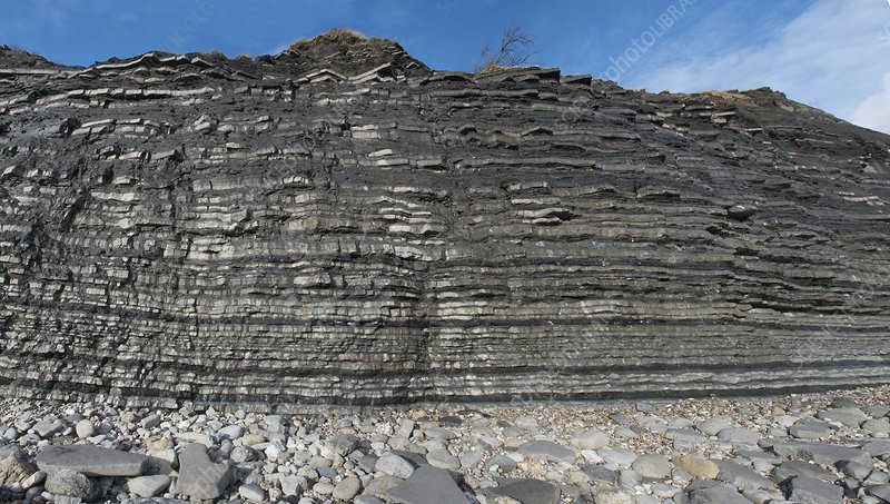 Blue Lias cliffs
