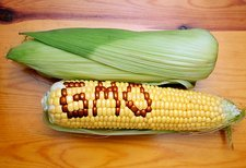 Genetically engineered maize