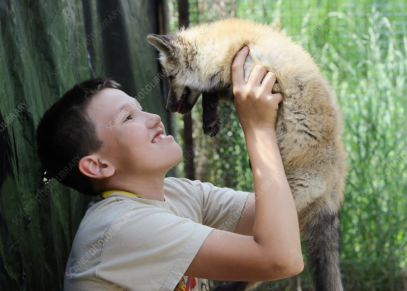 Child and domesticated fox