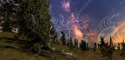 Bristlecone forest and the Milky Way
