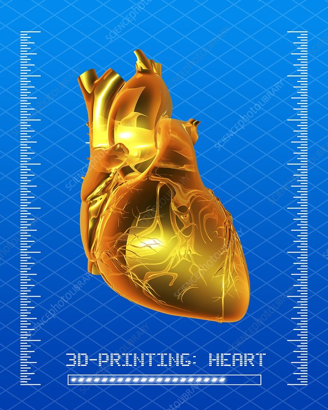 3D printing of a human heart, artwork