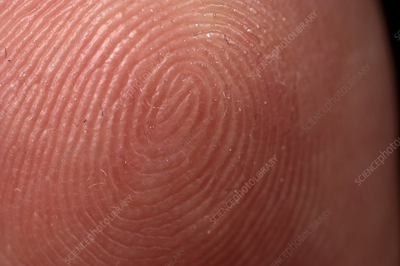 Fingerprint on human finger, close-up