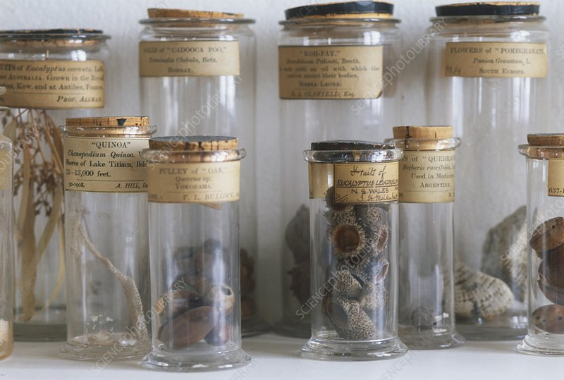 Old botanical specimen jars