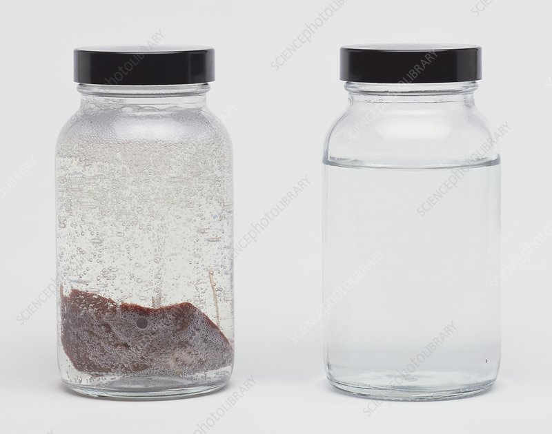 Clear jar of liver in liquid