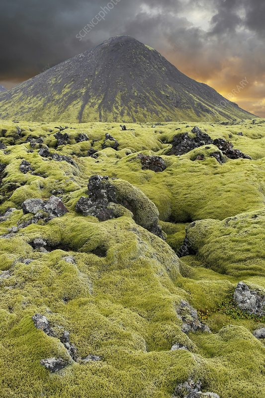 Moss-covered lava field, Iceland