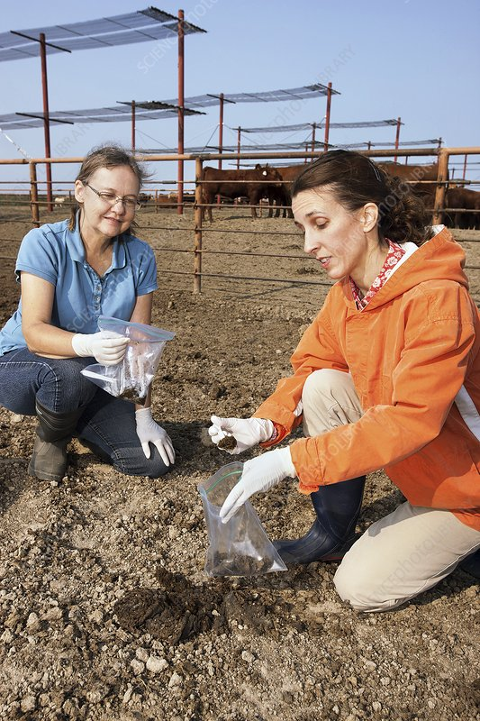 Cow faeces research
