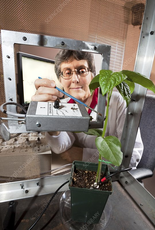 Plant disease transmission research