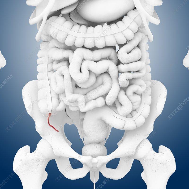Appendix, artwork