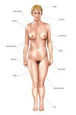 Anatomical differences between sexes