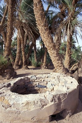 Oasis well and trees
