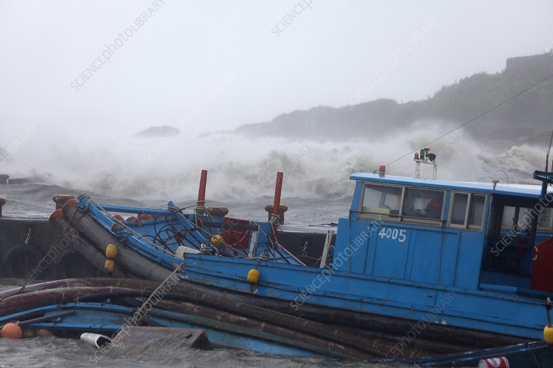 Coastal storm surge during Typhoon Usagi
