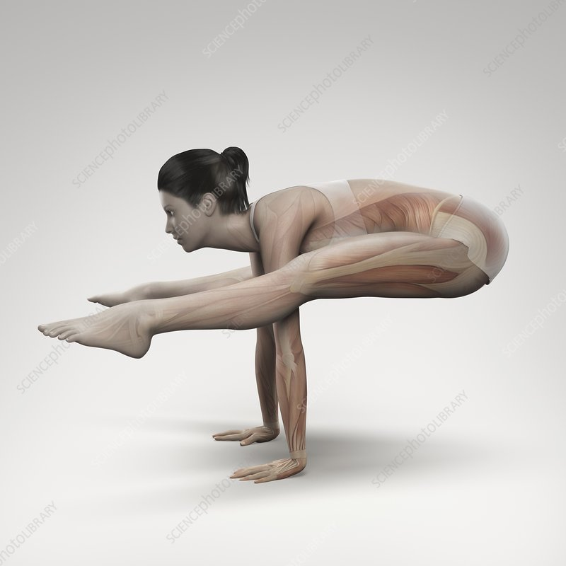 Yoga Firefly Pose, artwork