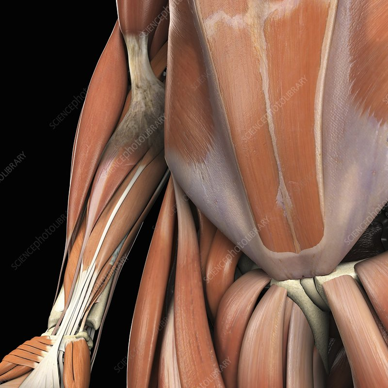 The Muscle System, artwork