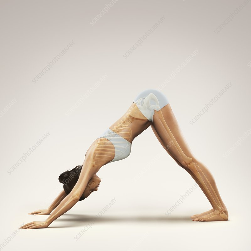 Yoga Downward Facing Dog Pose, artwork