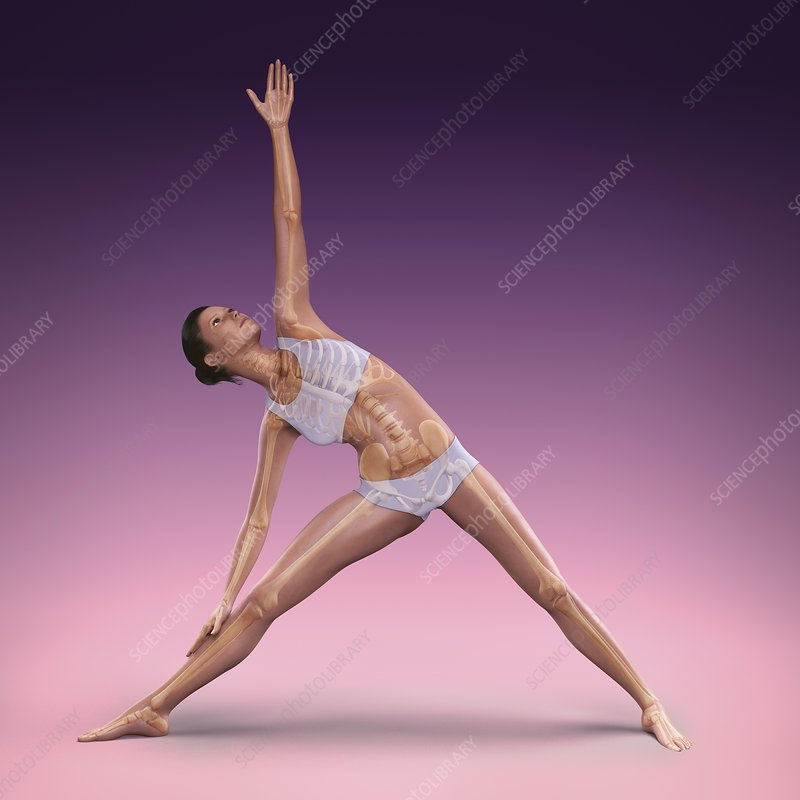 Yoga Triangle Pose, artwork