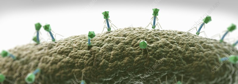 Bacteriophages, artwork