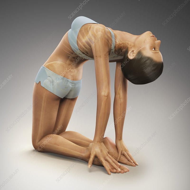 Yoga Camel Pose, artwork