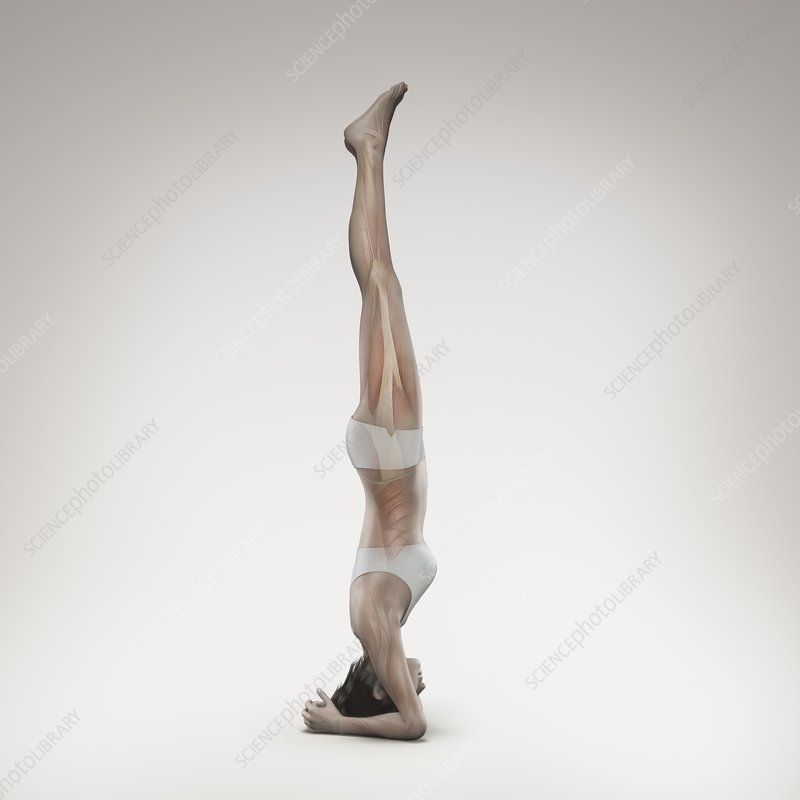 Yoga Headstand Pose, artwork