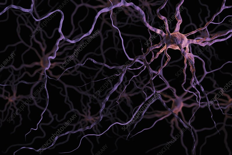 Neurons, artwork