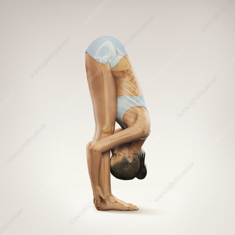 Yoga Standing Forward Bend Pose, artwork