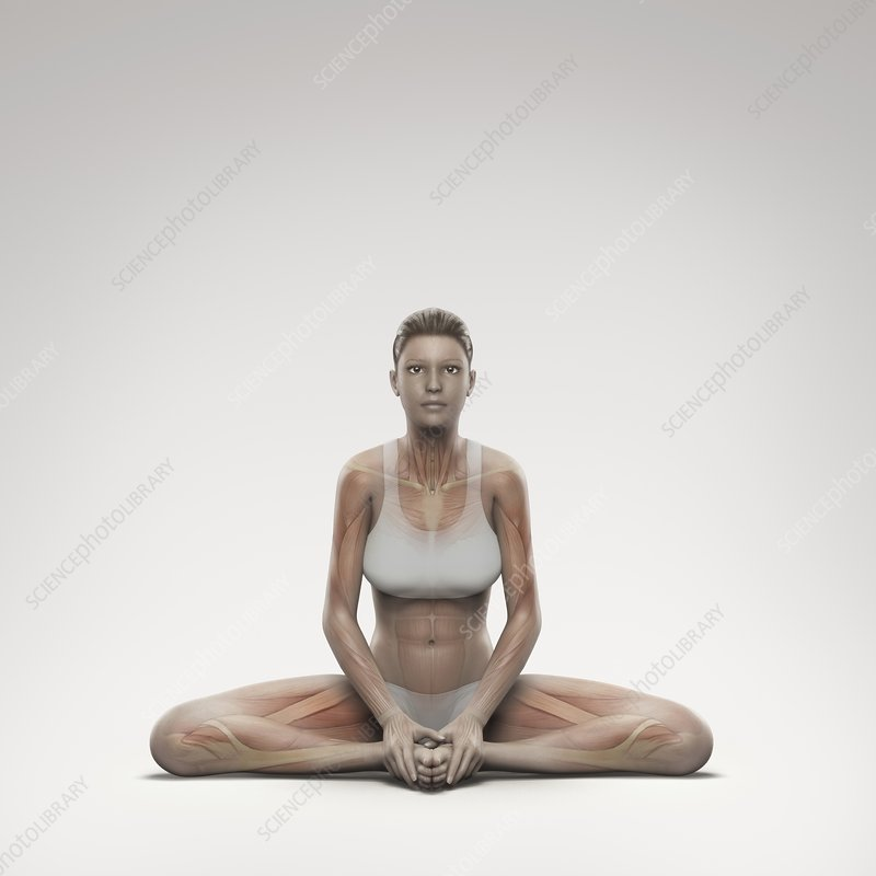 Yoga Bound Angle Pose, artwork