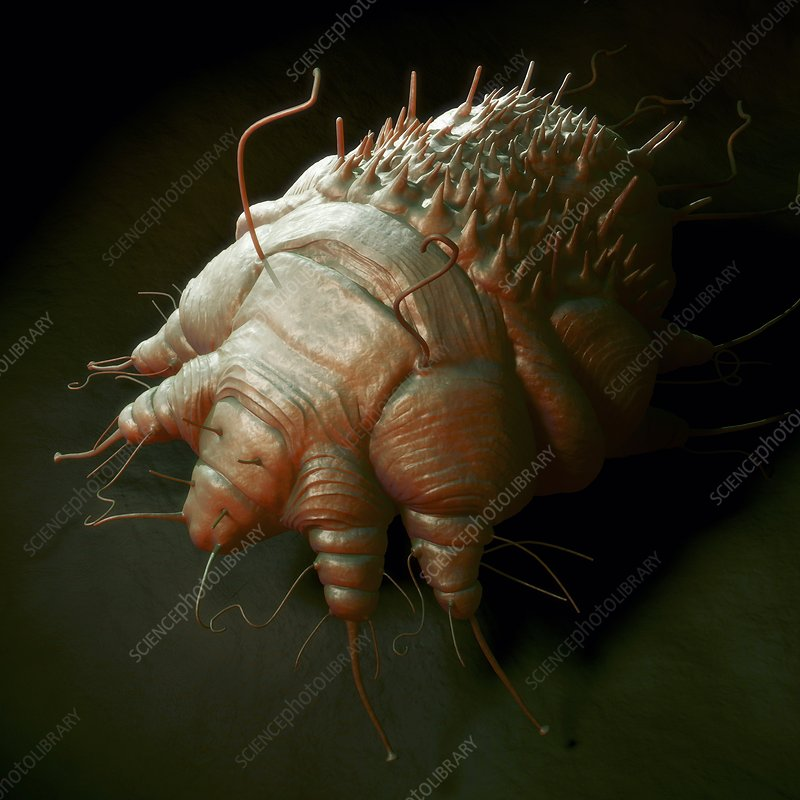 Scabies Mite, artwork