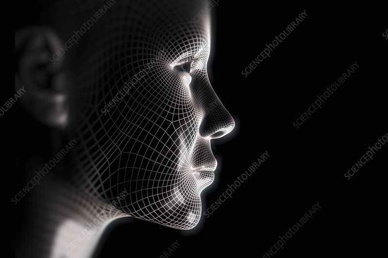 Wireframe Face, artwork