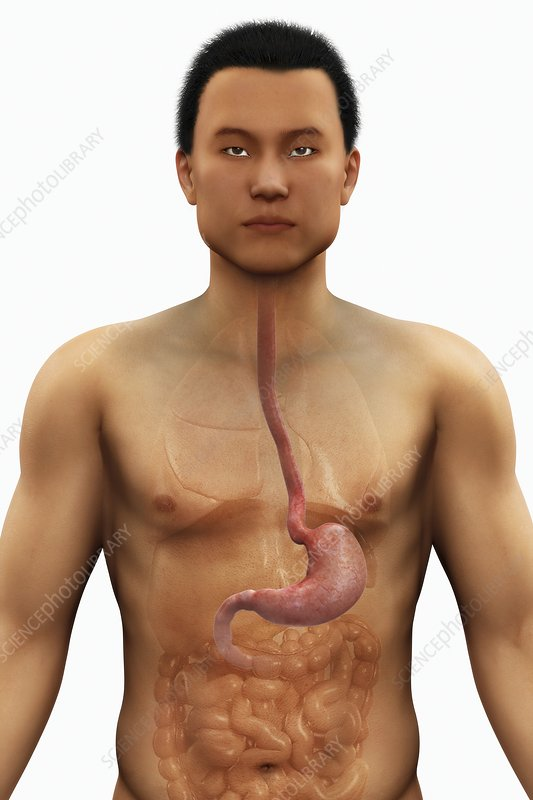 The Stomach, artwork