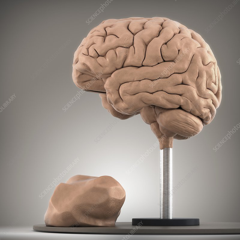 Clay Model of Brain, artwork