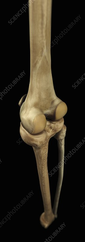 Knee Bones, artwork