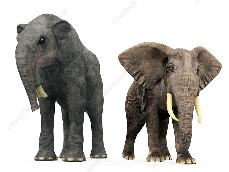 Deinotherium and elephant compared
