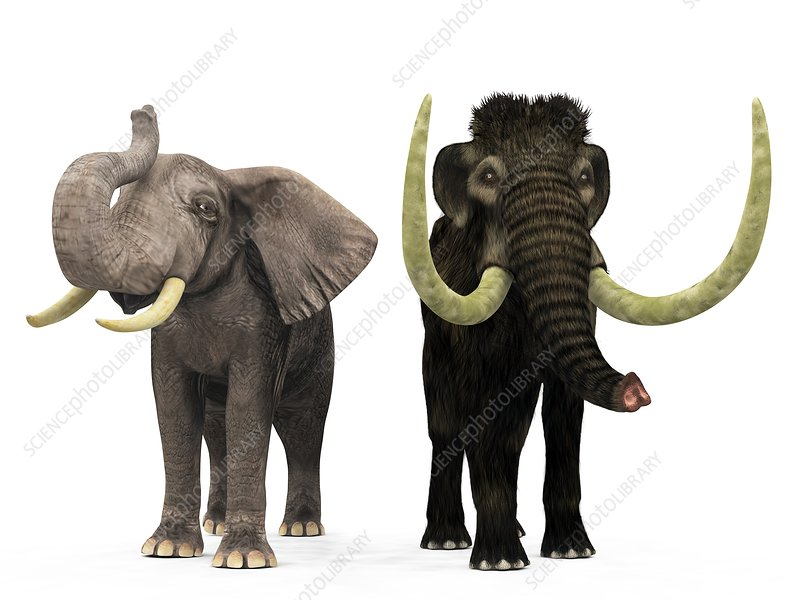 Mammoth and elephant compared, artwork