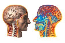 Brain, historical artwork and MRI scan