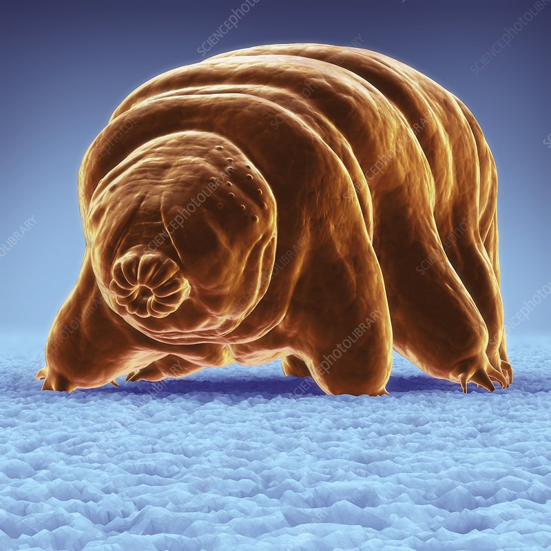 Water Bear (Tardigrades), artwork